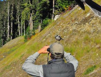 Whistler Bear Viewing guide